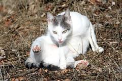 i musciii (robgarbage) Tags: cats cat countryside kitten pussy kittens campagna felino felini puss gatto gatti musci