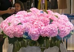 Saturdays Pinks - Hydrangeas (Pushapoze (MASA)) Tags: newyorkcity pink rose explore hydrangea dior hortensias