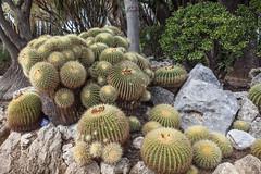 Jardin exotique de Monaco (Bru42) Tags: cactus garden de jardin delicious exotic jardim tuin  extico garten giardino  jardn suculentas kaktus exotique succulentplants  succulentes jardinexotique exoticgarden esotico heerlijke giardinoesotico exotischergarten plantesgrasses exotische  exotischer  herrliche  succulento   plantascarnosas jardnextico fettpflanzen piantegrasso succulentplanten exotiquejardintuincctusplantassuculentas deliciosasjardimextico