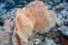 DSC02409 (Martin Flemig) Tags: underwater diving scubadiving kamera tauchen malediven unterwasser nex7 helengeliislandresort