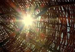 Sun Rays (Khaled M. K. HEGAZY) Tags: orange brown sun white black macro nature yellow closeup nikon outdoor egypt parasol coolpix   p520 rassedr
