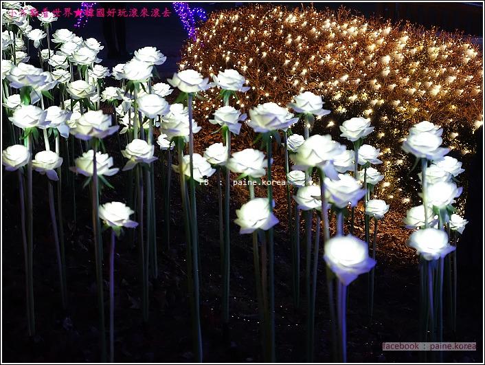 晨靜樹木園 五色星光庭園展 (60).JPG