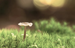 If you truly love nature... (Nicola G. Fotografie) Tags: herbst wald pilz licht natur wandern moos canon 55250 sptsommer deutschland wood nature walking hike moss mushroom light bokeh germany autumn
