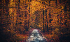Enchanted forest (Tim RT) Tags: tim rt reutlingen enchanted forest natur fall autumn herbst geschichten own stories story outdoor nature color ful colore beautiful warm tones nikon d810 nikon24120mm 24120mm 810 flickr phoography new picture