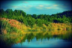 Golden Hour on Stowe Creek (dianealdrich - Please read my profile) Tags: southjersey southernnewjersey newjerseytnc10 newjersey golden ruralscene scene serene calm landscape water creek stowecreekstatepark stowecreek ♥naturelover♥ nature park
