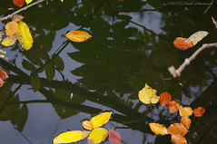 Pensive Autumn (Natali Antonovich) Tags: lahulpe park autumn pensiveautumn nature belgium belgique belgie reflection water parallels