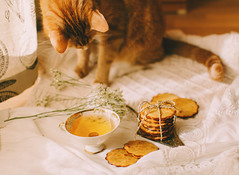 Yellow Cookies for yellow cat (Yuliya Bahr) Tags: cat red yellow tea morning breakfast cook cookies white tenderness soft softness yummy dukandiet sunlight autumn mood pets cats bakery pastry biscuit teatime cup stilllife fotografberlin fotografhamburg fotografpotsdam home homemade allday