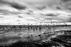 Black Sea before storm (Chacky) Tags: walking alone along beach black sea constanta romania bird seagal ocean blacksea bw blackandwhite block landscape nature canon canon600d camera monochrome melancholy wave wavy mamaia seabird