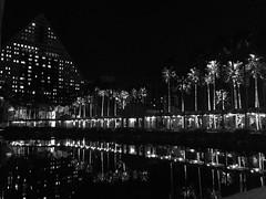 Bay Lake, Florida (888YKB) Tags: waltdisneyworlddolphinresort baylake ia16 intacctadvantage palmtrees walkway night