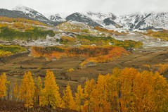 Unexpected Love (Patrick.Russell) Tags: crestedbutte co cb colorado nikon d300 prime 35mm fall peakseason lightstoke autumn aspens layers winter leaves outdoors landscape outside adventure mountains outdoor camping highcountry foliage