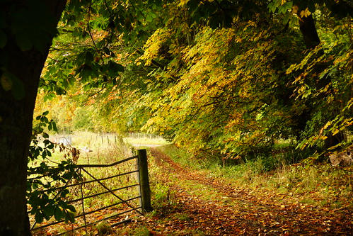 Autumnal Woodland Gate