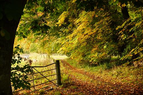 Autumnal Woodland Gate