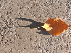 1 Dusk with a Leaf (Robert Cowlishaw (Mertonian)) Tags: leaf fall autumn simplicity curvy mertonian robertcowlishaw canonpowershotg1xmarkii canon powershot g1x mark ii light dawn sunset macro cement concrete texture minimalism 1 fragile yellow