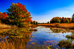 erie wetlands (david_sharo) Tags: nature erie wetlands scenic vivid reflection water