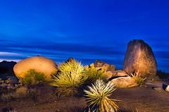 Light painting in Joshua tree national park (Shibu Thannikkunnath) Tags: lightpainint rocks bluesky blue joshuatree desert california afterdark arizona meteorshower jeminid nikond7000 tokina1116 nightphotography night dark