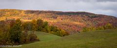 Autumn Curves (maureen.elliott) Tags: fall autumn landscape curves hills trees view niagaraescarpment beavervalley nature outdoors