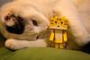Porto Maison Rooms / Canon EOS60D:SIGMA 17-50mm F2.8 EX DC OS HSM (telenity) Tags: japan tateyama cat danboard cafe 日本 館山 ダンボー ニャンボー 猫 ポルトメゾン