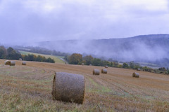 Late (dlorenz69) Tags: herbst autumn hay landscape nebel fog clouds wolken berge hgel hnge slope hills mountains hessen taunus fall harvest ernte rainy evening abend