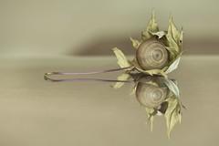 Le cdre d'automne est en fleur (Astrid Deschenes) Tags: automne boule feuille miroir reflet cdre