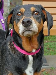 Daisy_02 (AbbyB.) Tags: mtpleasantanimalshelter animalshelter easthanovernj newjersey adopt rescue shelter pet shelterpet petphotography dog canine
