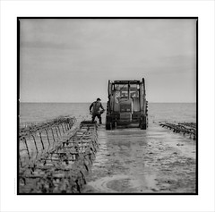 Harvesting Oysters -  le de R (Gary Rowlands) Tags: nouvelleaquitaine france sea shore oysters farming blackandwhite monochrome hasselblad 110mm fe 203fe ilford panf kodak hc110h atlantiqueroadtrip