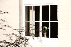 A Whiter Shade Of Pale (acwills2014) Tags: window tulips white romsey vase october shadows sunshine