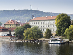 Moldau Swan Feeding (Anders sterberg) Tags: prag 2016 moldau swan feeding buildings