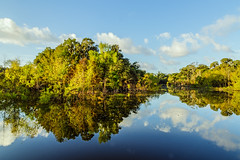 Hale Lake Reflections (Mike Schaffner) Tags: bbsp brazosbendstatepark clouds halelake lake morning oxbow park pond reflections sky statepark sunlight trees water needville texas unitedstates us