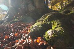 Fairy tale (ambrasimonetti) Tags: fairy tale bosco forest foresta fata fantastico