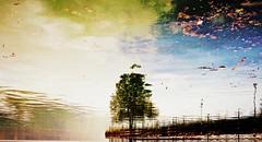 * (PattyK.) Tags: ioannina giannena giannina whereilive lake pamvotida lakepamvotida ioanninalake epirus ipiros tree greece griechenland hellas ellada reflection upsidedown september 2016 europe balkans amateurphotographer ilovephotography        sky clouds