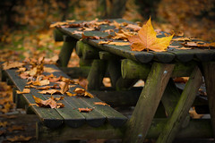 Autumn picnic (Artur Tomaz Photography) Tags: fontelo leaf yellow autumn bench closeup colors nature orange outono pov table wood fall dof viseu leaves green bokeh