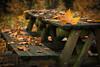 Autumn picnic (Artur Tomaz Photography) Tags: fontelo leaf yellow autumn bench closeup colors nature orange outono pov table wood fall dof viseu leaves green bokeh