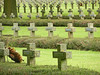 No need for words (Antropoturista) Tags: belgium lommel cemetery graves solfiers german 193945 crosses religion remember