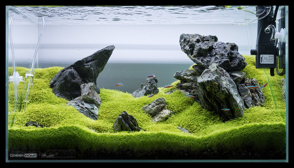 Green Aqua Showroom (viktorlantos) Tags: aquascaping aquascape ...