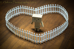 Danbo and the Fence (HFF) (13skies) Tags: danbo hff table tabletop sonyalpha99 fence happyfencefriday character fun small cute tiny