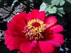 DSC_0013 (Jozef rulof) Tags: roluf jozef jose flor vermelho redgente familia caminhos passeio espiritual jozefrulof