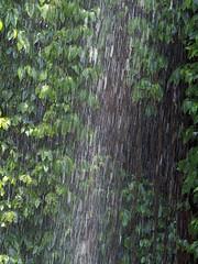 Crystal Shower Falls (Kaptain Kobold) Tags: kaptainkobold dorrigo nationalpark nsw australia waterfall falls water nature scenery