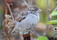 (careth@2012) Tags: nature beak feathers wildlife
