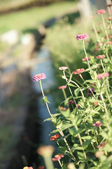 flickr_150828_01 (est150311) Tags: japan sony nara a900