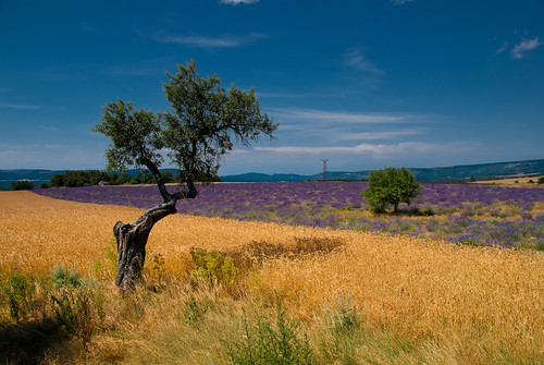 Provence_09_627