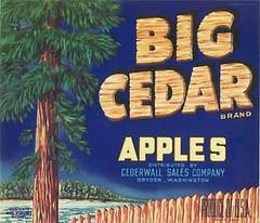 "Big Cedar • <a style=""font-size:0.8em;"" href=""http://www.flickr.com/photos/136320455@N08/21445488896/"" target=""_blank"">View on Flickr</a>"