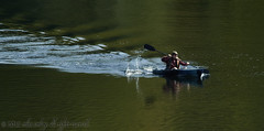 _49A1135 (mikeconley) Tags: usa river boat fishing vermont wake paddle row rowing rowboat brattleboro