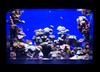 Aquàrium (ester68) Tags: aquarium smörgåsbord palmademallorca aquàrium palmaaquarium