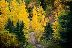 Autumn Road (LindbloomPhoto) Tags: road autumn fall colorado fallcolors country lakecreek