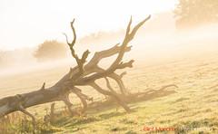 Hatfield_Forest-37 (Eldorino) Tags: park uk morning autumn trees nature forest sunrise landscape countryside nikon britain centre jour hatfield bishops stortford essex hertfordshire stanstead hatfieldforest