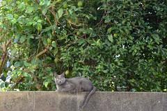 (23fumi) Tags: life cat nikon   a09 d600 tamron2875    tamronspaf2875mmf28xrdi