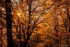 Autumn Star (Nick Panagou) Tags: autumn light sunset orange sun forest landscape gold dramatic greece sunstar greatphotographers thessaly orangeskies flickrsbest superphotographer silhouettesshadows bestshotoftheday magnesia flickrbest bestphotographer mtpelion shadowssilhouettes spiritofphotography