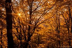 Autumn Star (Nick Panagou) Tags: autumn light sunset orange sun forest landscape gold dramatic greece sunstar greatphotographers thessaly orangeskies flickrsbest superphotographer silhouettesshadows bestshotoftheday magnesia flickrbest bestphotographer mtpelion shadowssilhouettes spiritofphotography