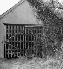 Trebarvah (leavesandpuddles) Tags: blackandwhite bw barn cornwall farm agrarian farming ivy agriculture lattice biancoenero cornish kernow blancetnoir penwith ivyclad mountsbay perranuthnoe schwarzundweiss eastpenwith trebarvah