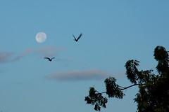 """IMGL3648 (Mahmoud Bakheet """"Hosary"""") Tags: moon"""